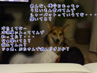 DSC01600.jpg