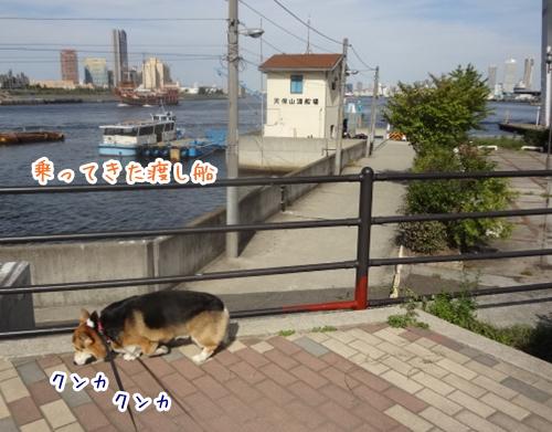 DSC05455_20121005225654.jpg
