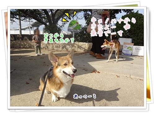 DSC05464.jpg
