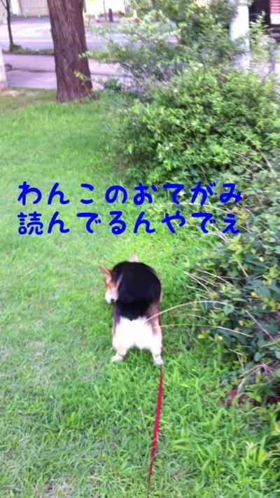 IMG_7144_convert_20120712170526.jpg