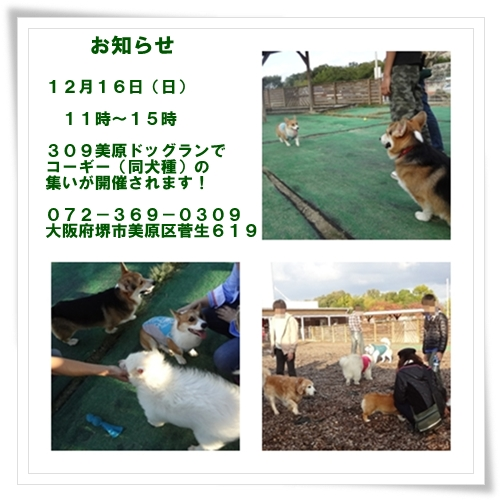p5_20121209174831.jpg