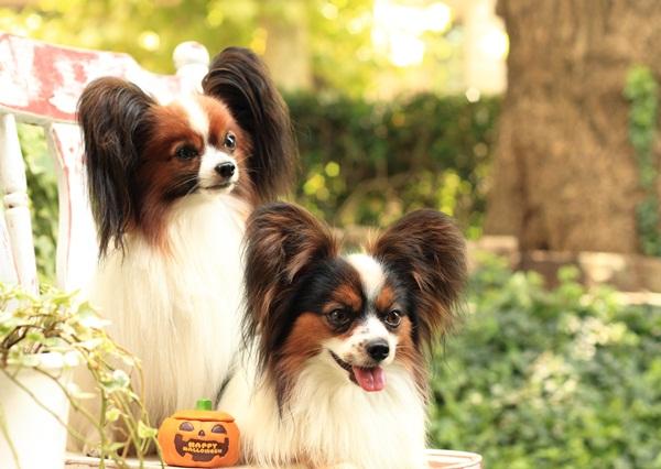 2011_09_12 EOS犬撮影DPP_0358