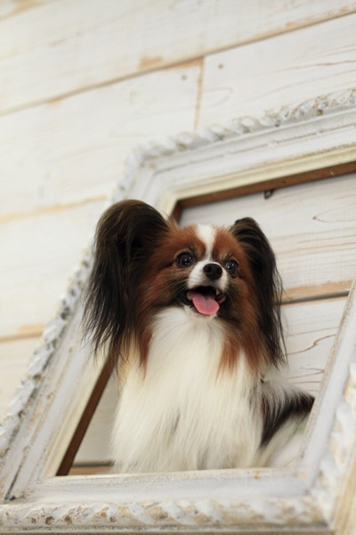2011_09_12 EOS犬撮影DPP_0030