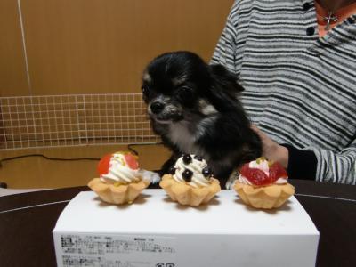 菜の花ケーキ