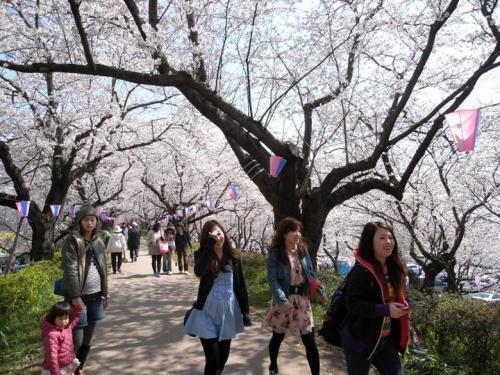 2010sakura02.jpg