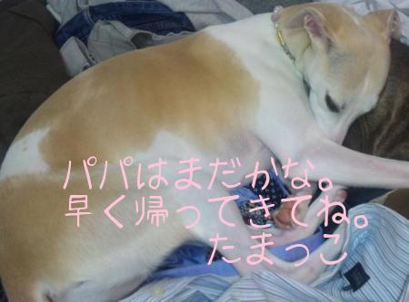 100325TamaSleep.JPG.jpg