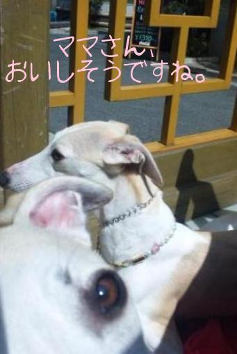 100327TsukushiroShiroEye.JPG.jpg