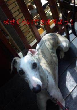 100412Sora.JPG.jpg