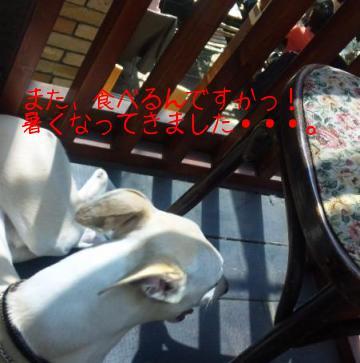 100412ShiroMamas1.JPG.jpg