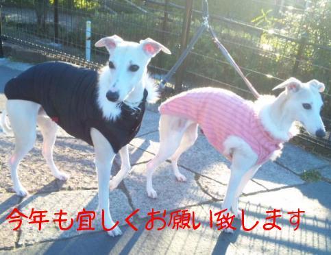 110109ShiroTamaSaigo.jpg