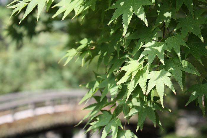 京都御所 (5)