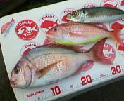 20061218 t鯛