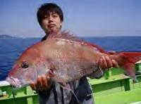 大鯛5.2KG.JPG