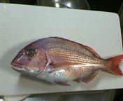 20070128鯛