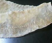 イシダイの皮