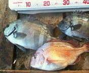 20061223 鯛