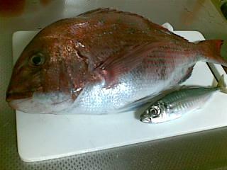 200905061.5kg