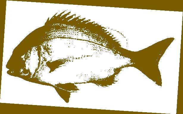 gyotaky.jpg