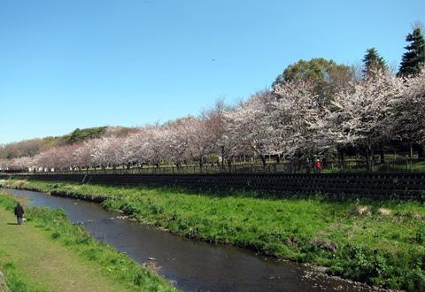 20120407野川1