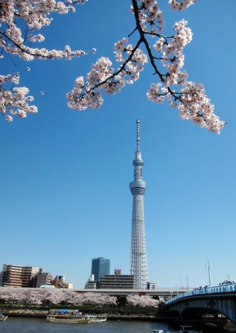 浅草桜2012