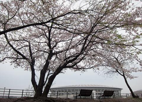 鶴見川桜3