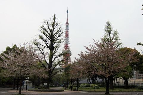 芝公園と桜