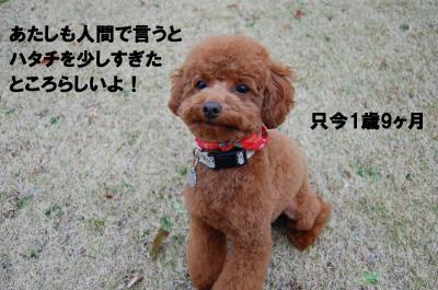 DSC_0378+-+繧ウ繝斐・_convert_20130110224008