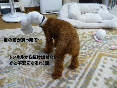 P1040305+-+繧ウ繝斐・_convert_20130110224725
