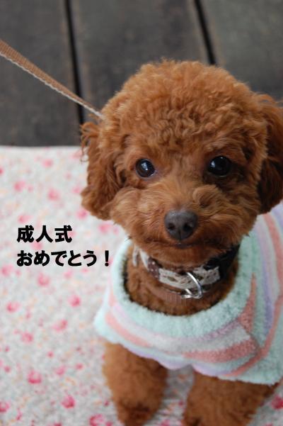 DSC_0087+-+繧ウ繝斐・_convert_20130110225907