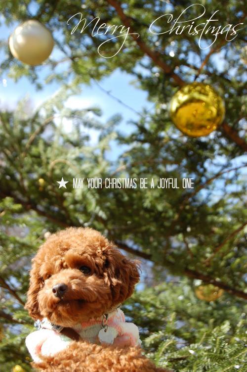 DSC_0101_convert_20121214154216.jpg