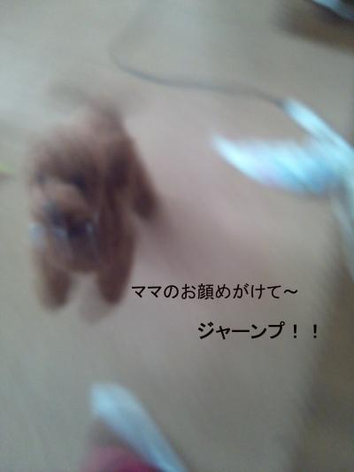 DSC_0355-001_convert_20120930132932.jpg