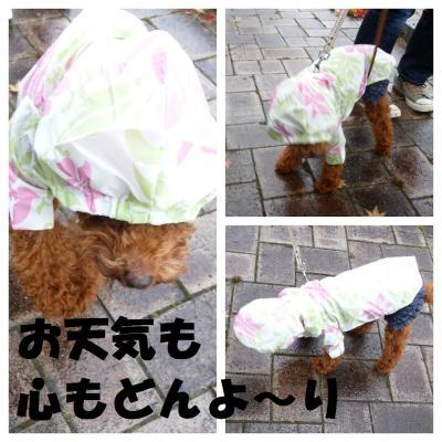 PicMonkey+Collage_convert_20121127224654.jpg