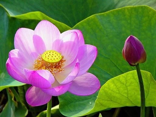 龍馬の花2