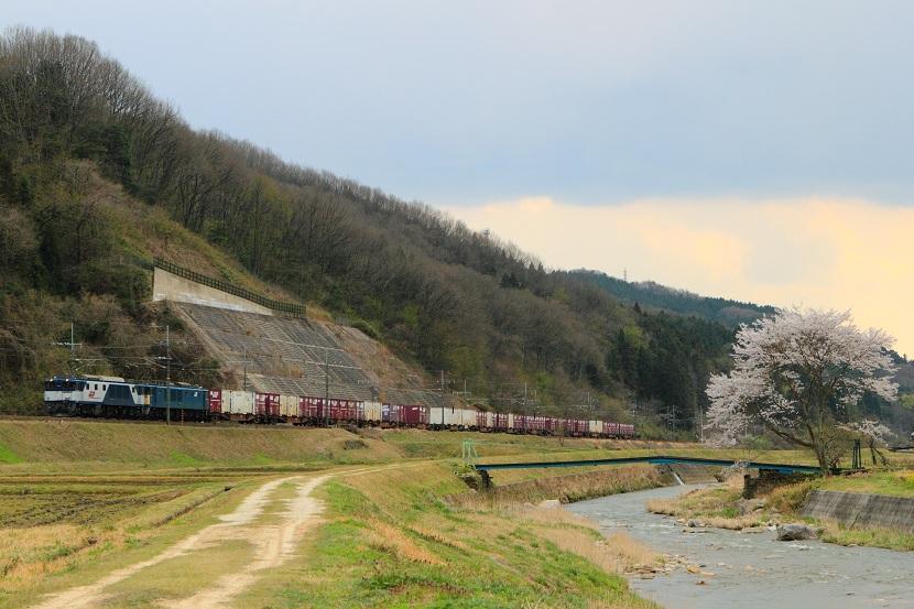 春だ!桜だ!お花見しようぜ!