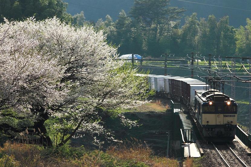 さくら咲く木曽の春