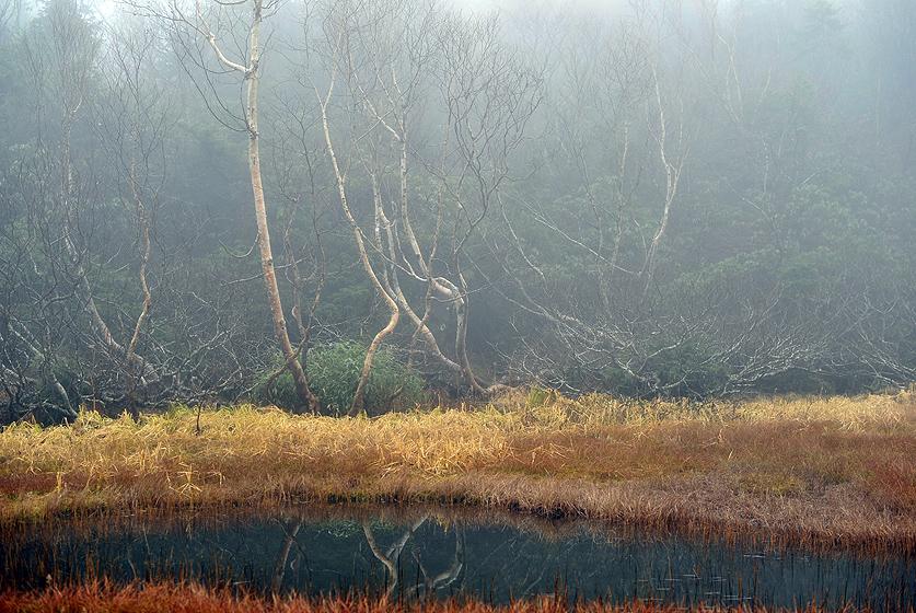 水芭蕉湿原2
