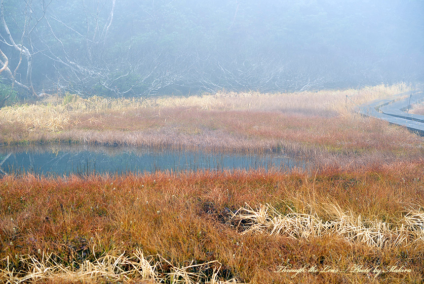 水芭蕉湿原1