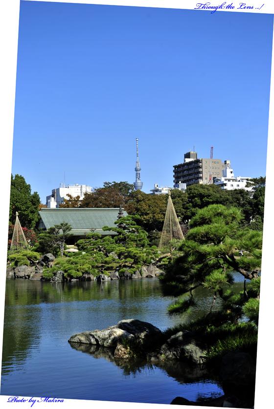 清澄庭園5