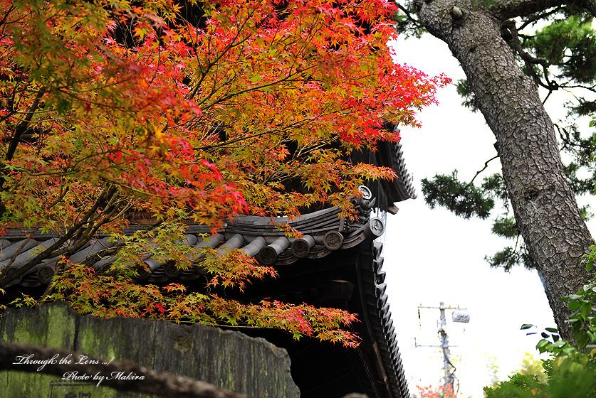 山門と紅葉3