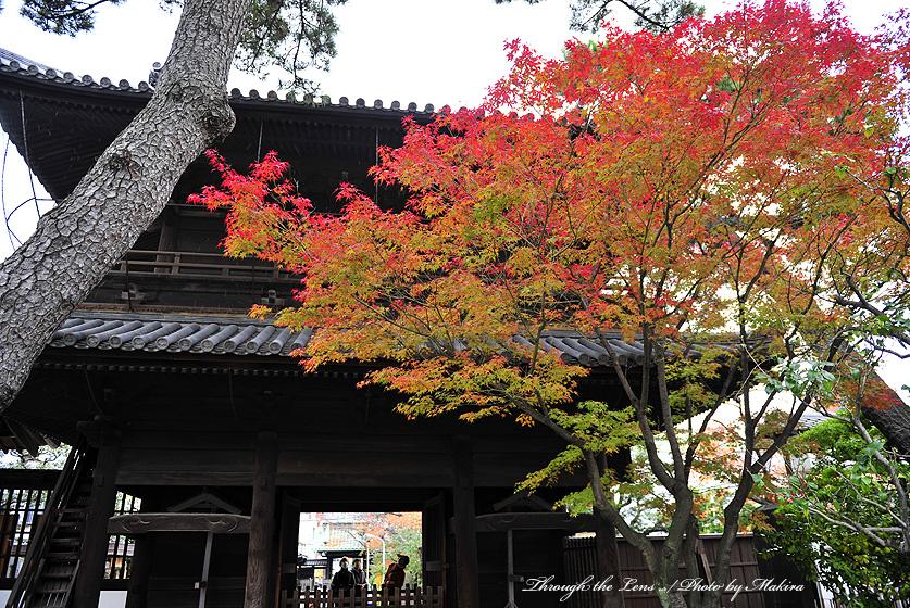 山門と紅葉1