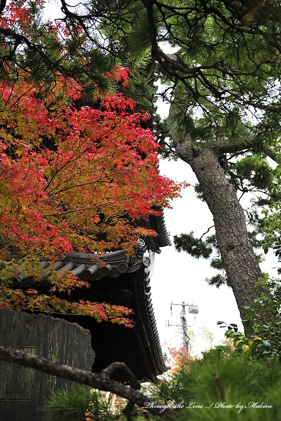 山門と紅葉2