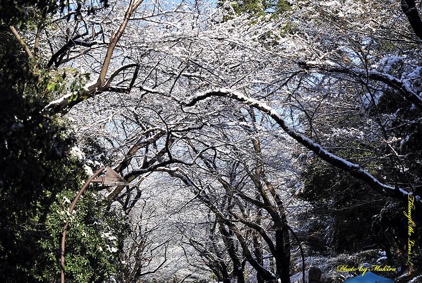 上野公園雪景色1