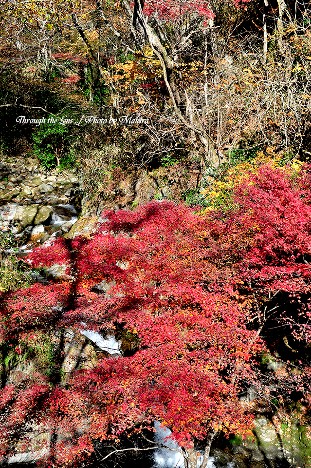 渓流と紅葉1