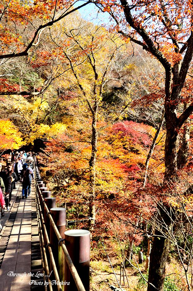 汐見滝吊り橋3