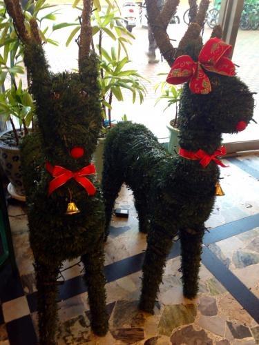 クリスマスディスプレイも街のあちこちで見かける様になりました^^