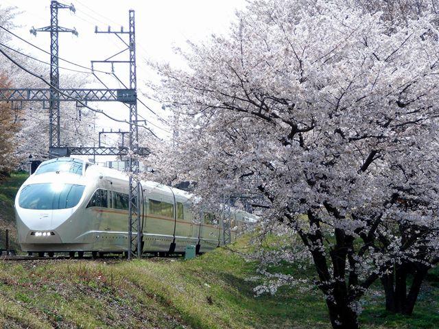 VSE+桜