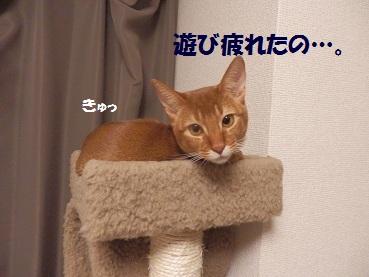 P1113270.jpg
