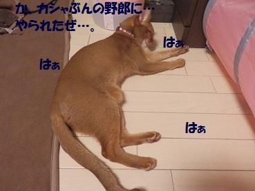 P1133361.jpg