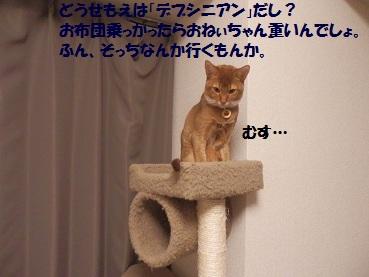 P1143363.jpg
