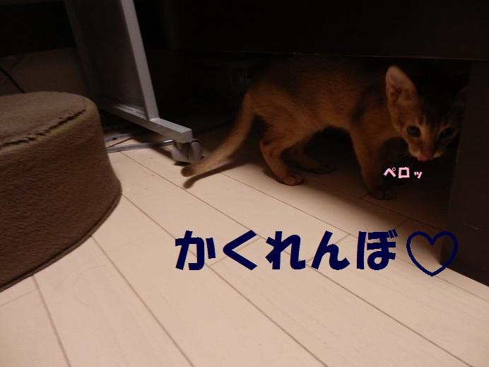 P7240033.jpg